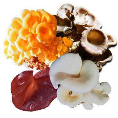 誠食好市嚴選太空包菇8顆(珊瑚菇+藍寶石菇+秀珍菇+黑木耳+柳松菇種類數量隨客任意搭)