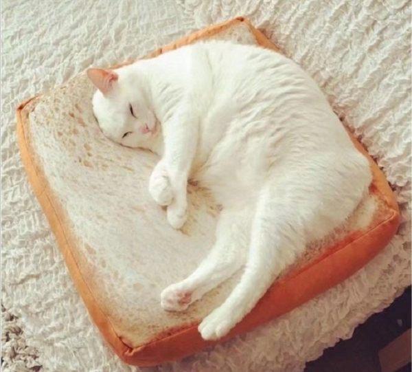 ig 爆紅 熱賣款 貓奴必備 吐司坐墊 貓咪坐墊 F30304【H00615】