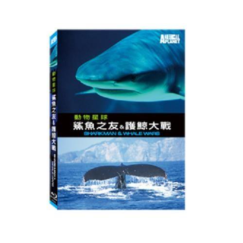 鯊魚之友&護鯨大戰 藍光BD SHARKMAN & WHALE WARS 大白鯊掠食者 鯨魚 (音樂影片購)