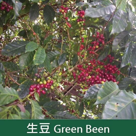 【福璟咖啡】《未烘焙生豆》尼加拉瓜 暴風莊園 法蘭西斯柯