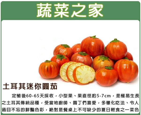 【蔬菜之家】G92.土耳其迷你茄種子