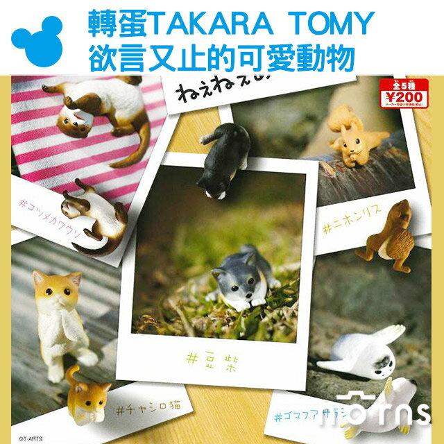NORNS【轉蛋TAKARA TOMY欲言又止的可愛動物】日本 扭蛋 公仔 玩具 擺飾 裝飾 柴犬 貓咪 日本松鼠 海豹 水獺