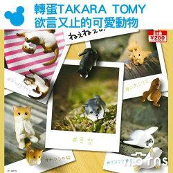 【轉蛋TAKARA TOMY欲言又止的可愛動物】Norns 日本 扭蛋 公仔 玩具 擺飾 裝飾 柴犬 貓咪 日本松鼠 海豹 水獺