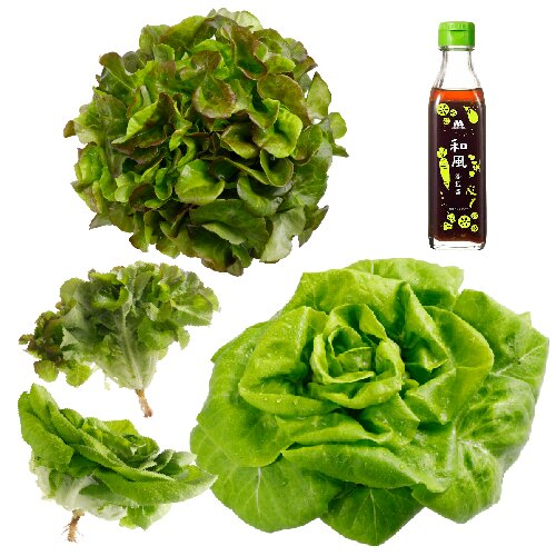 (免運)【MOS摩斯漢堡】水耕蔬菜嘗鮮組-奶油波士頓萵苣(180g / 包)(3入)紅橡木萵苣(150g / 包)(3入)(限時贈和風醬(220g / 罐)(1入) 0