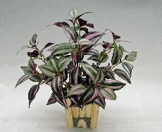 ★超低價★紫背鴨拓草(直立90葉)人造花空間景觀佈置造景