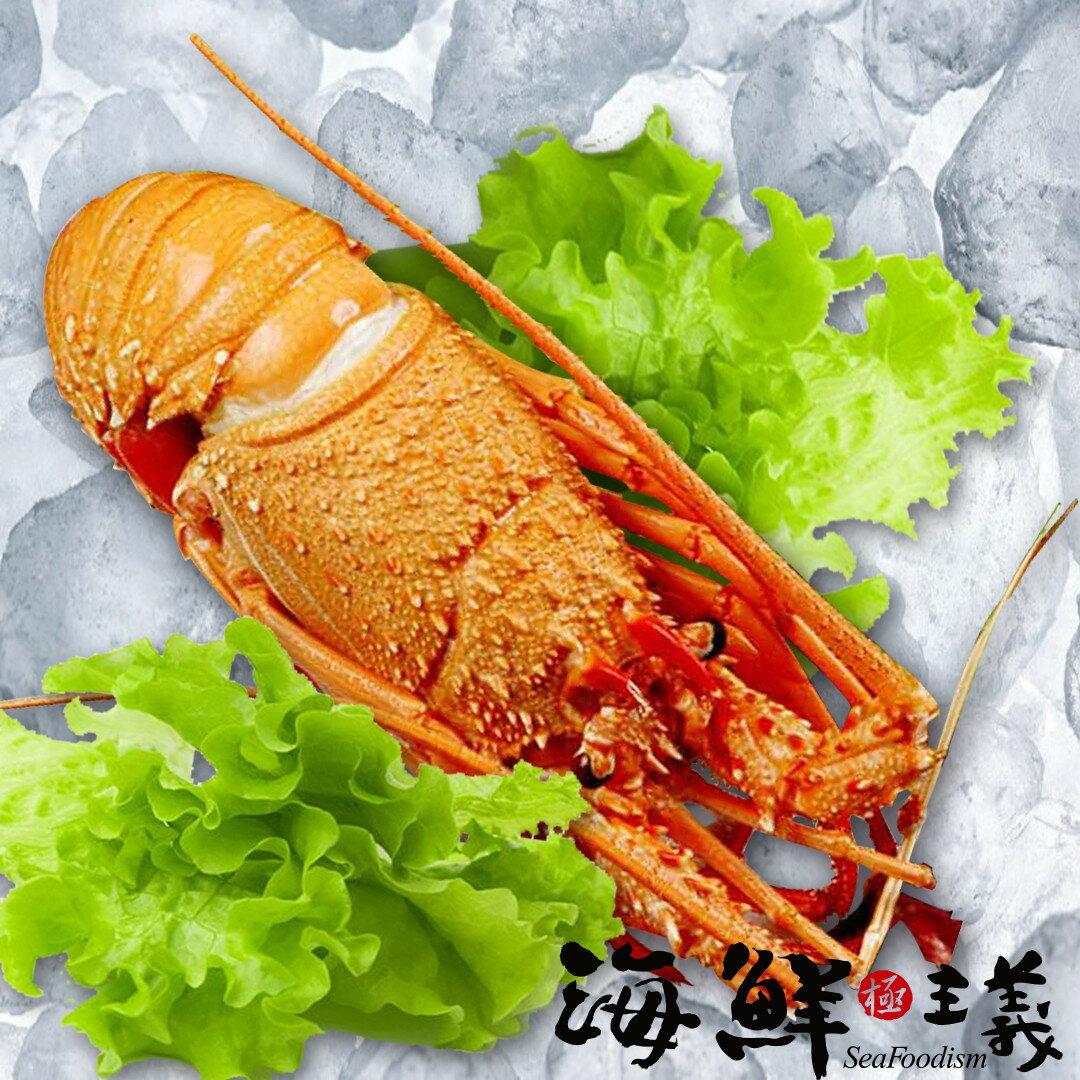 【海鮮主義】熟凍龍蝦550G ●來自古巴 ●生長在純淨海域,經捕撈後急速冷凍,鎖住自然鮮甜 ●肉質緊實錦密,十分Q彈 ●可做蒸、煮、焗烤、奶油