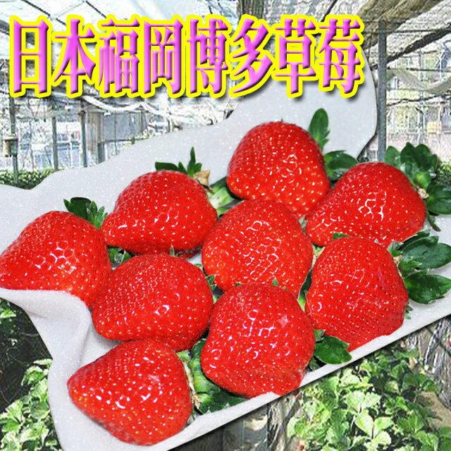 ✿仲菁✿日本空運進口福岡博多草莓2P-免運費