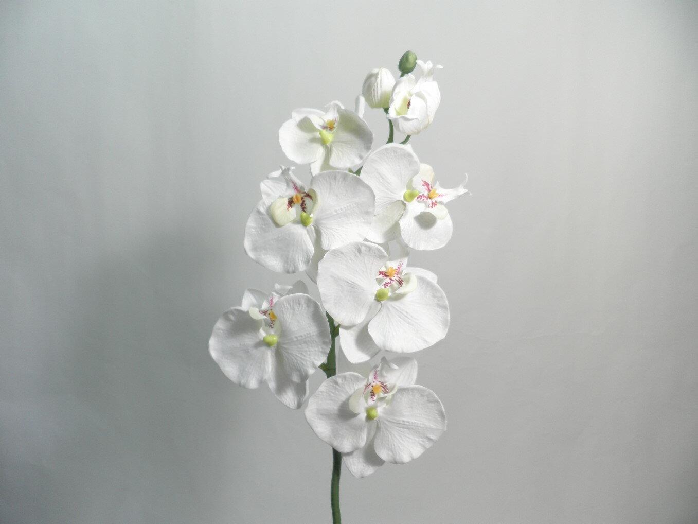 ★超低價★29吋 蝴蝶蘭-乳白 / 人造花 空間 景觀 佈置 造景