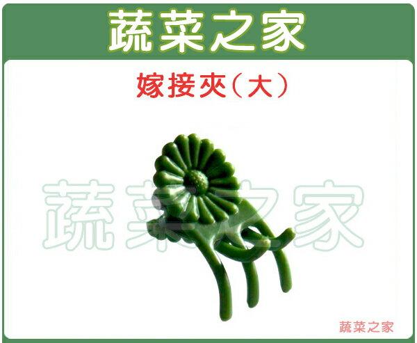 【蔬菜之家009-C53】嫁接夾(固定夾.蘭花夾)-(大)(30入/組、500入/包)