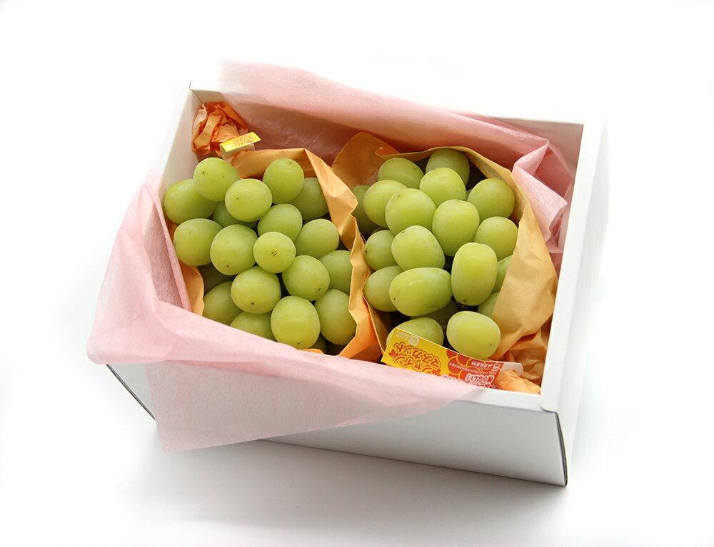 日本長野麝香葡萄2房禮盒