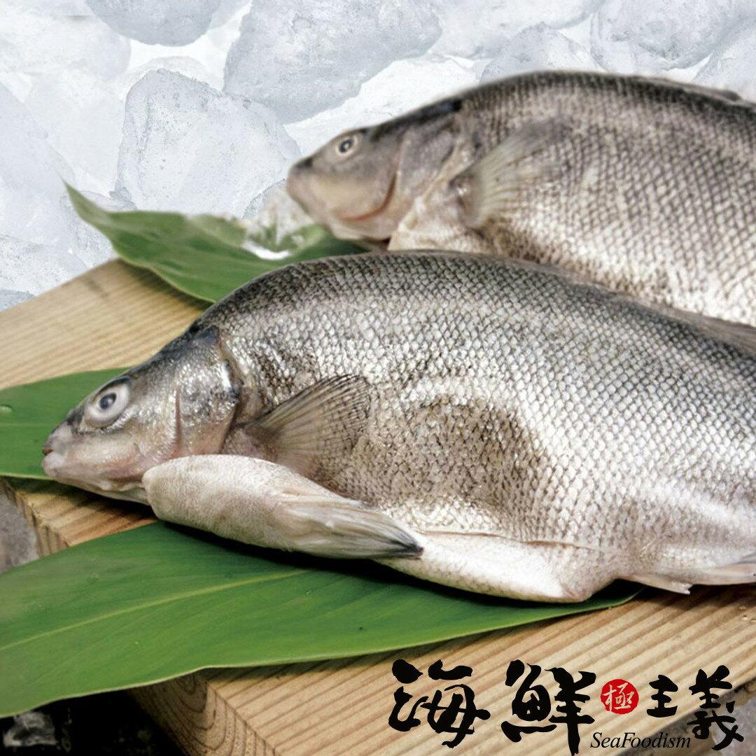 【海鮮主義】貴妃魚~澳洲銀鱸 300g±10
