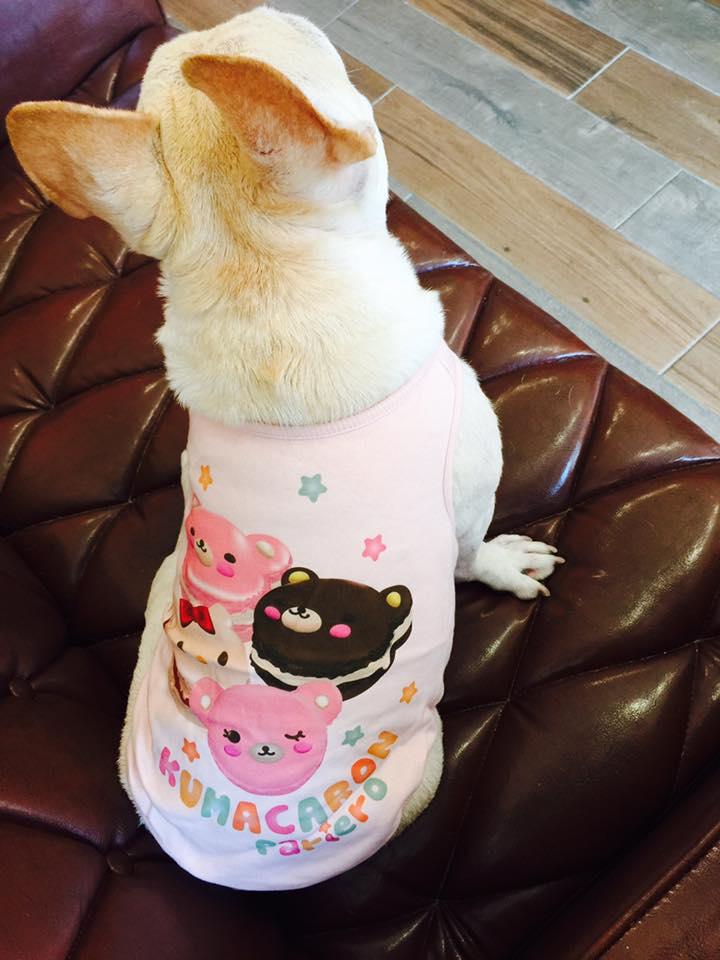 【LOHAS BULL】日本原裝進口 可愛蛋糕小熊 白色 粉色 狗狗衣服 犬用衣服