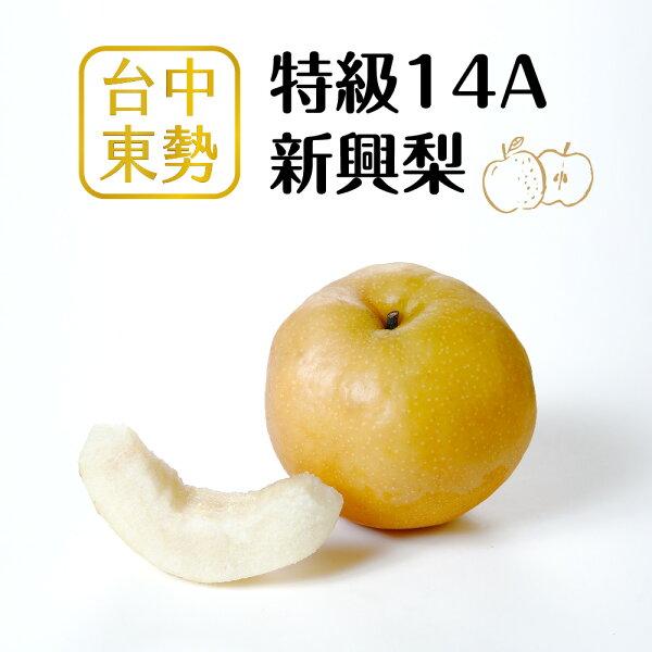myselect:【好實選果】【1入】頂規特大顆!特級14A新興梨(500g顆)