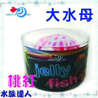 【水族達人】【造景裝飾】水世界AQUA WORLD《sea anemone 大水母 螢光桃紅 G-077-L-R》裝飾
