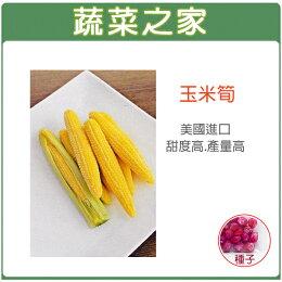 大包裝G97玉米筍種子90克