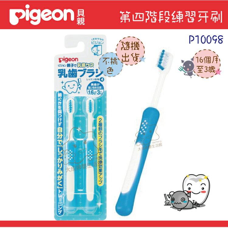 【大成婦嬰】Pigeon 貝親 第四階段乳齒牙刷組(6個月~3歲)10098 1