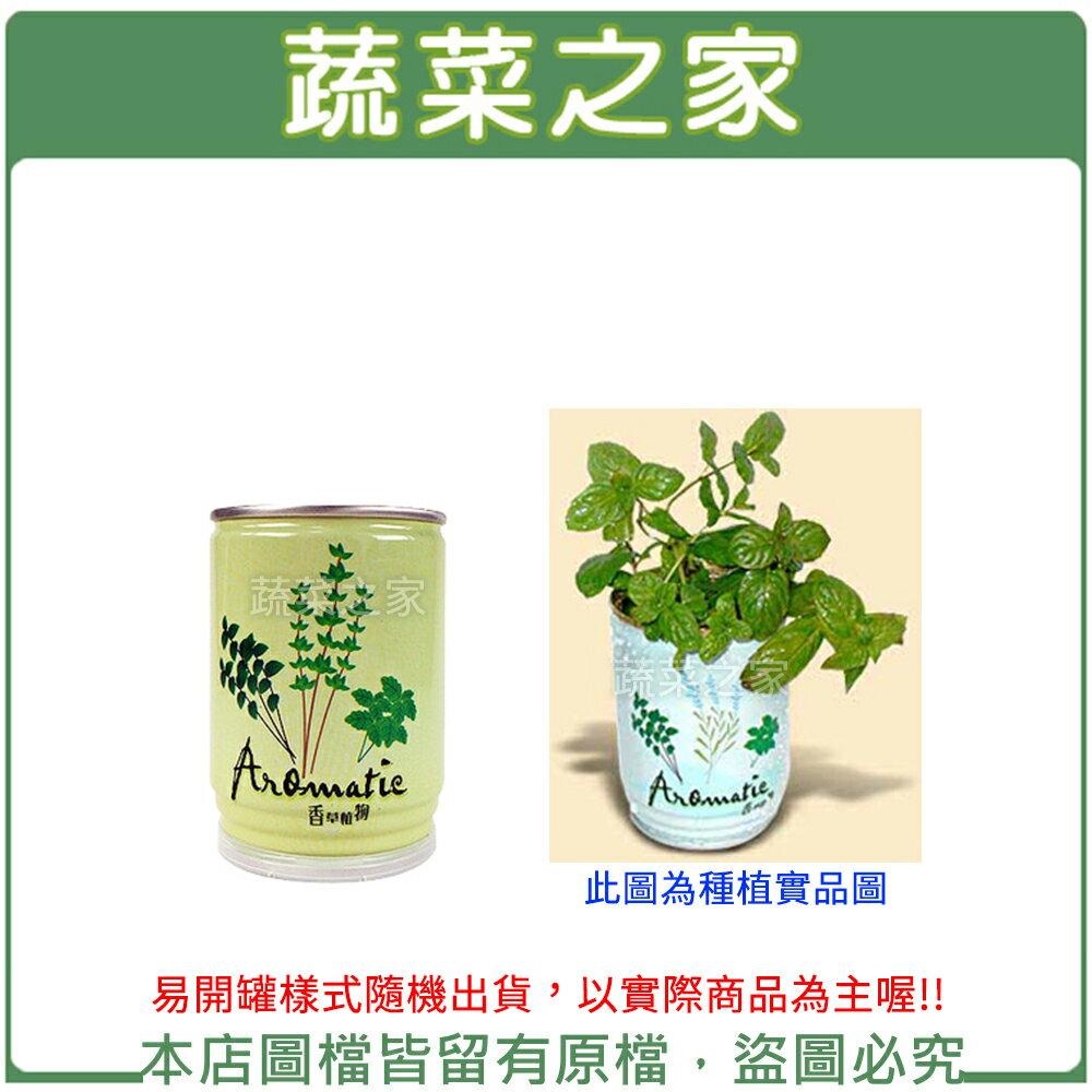 【蔬菜之家004-E07】iPlant易開罐花卉-薄荷