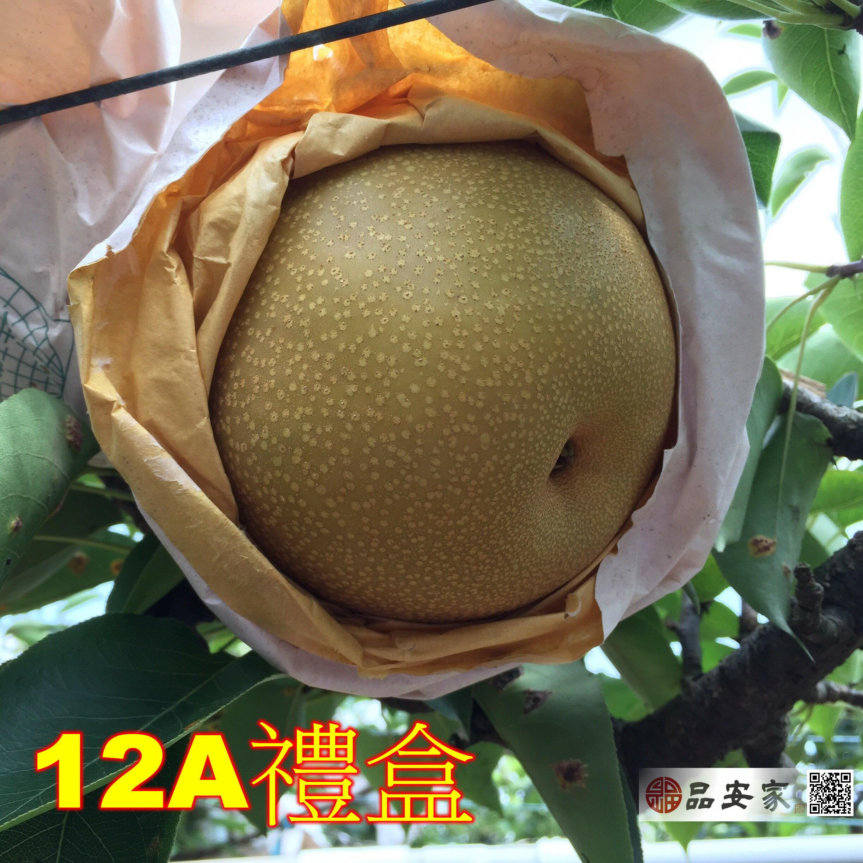 東勢豐水梨【無毒檢驗報告】質優美味--12A禮盒