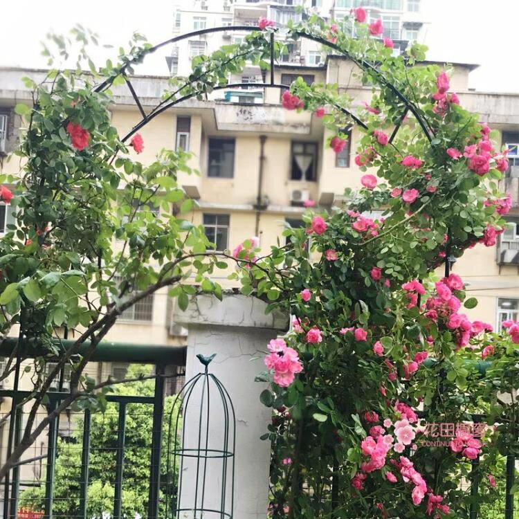 爬藤架 鐵藝戶外葡萄引路架拱門花架薔薇爬藤架子月季絲瓜拱形攀爬花支架T
