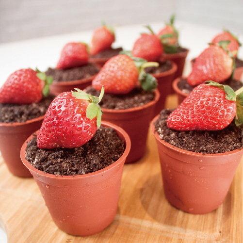 ★木匠手作★草莓盆栽提拉米蘇(一盒10入) 0