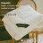 日本SHARPE無重力羽纖被-單人(高機能中棉;可水洗、蓬鬆、柔軟如羽絨) - 限時優惠好康折扣