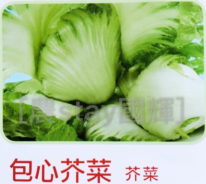 【農stay國輝】包心芥菜種子.長年菜種子《蔬菜種子小包裝5公克30元/包》