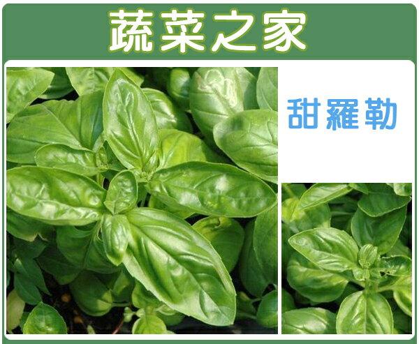 【蔬菜之家】K12.甜羅勒種子60顆