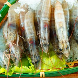 馬來白蝦  SGS無毒白蝦 份量自由挑 2~3人超享受【家適海鮮】全館四件免運 1