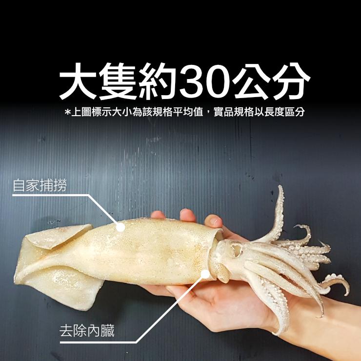 《燒烤必備》樂天最大規格 魷魚清肉 已去內臟 單尾240 / 280克 【家適海鮮】自家遠洋船隊捕撈 品質第一 1