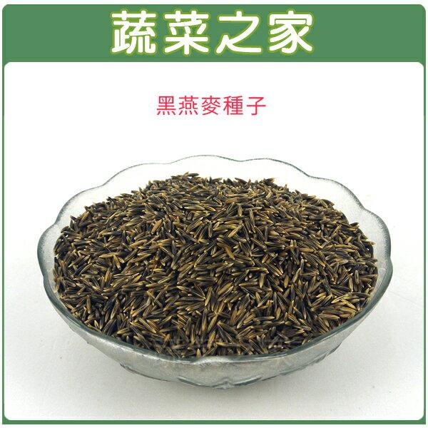 J15.黑燕麥種子25克(燕麥草.綠肥)