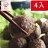 【毛彥人.秘釀甕滷味】香脆貢丸1包5顆X4包 / 新鮮製作 / 真空包裝 / 退冰即食 / 團購美食原價$240 加購省10元 0