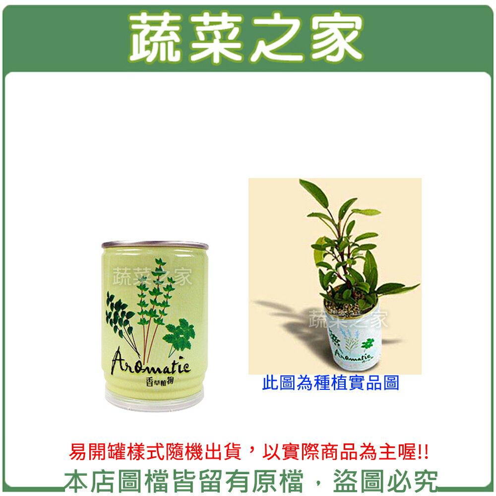 【蔬菜之家004-E08】iPlant易開罐花卉-鼠尾草