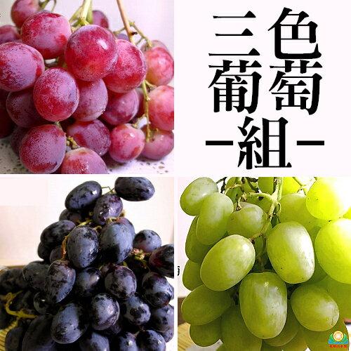 花?山水果 三色葡萄組(紅地球+黑無籽+綠無籽/箱)