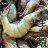 ㊣盅龐水產◇生凍白蝦30 / 40◇南美淨重1.1kg±10% / 盒 約30-40隻 / kg 零售$510 / 盒 批發 團購 優選食材 夯肉 - 限時優惠好康折扣