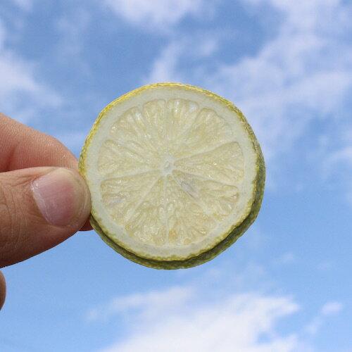 檸檬乾- 最接近新鮮檸檬的檸檬乾