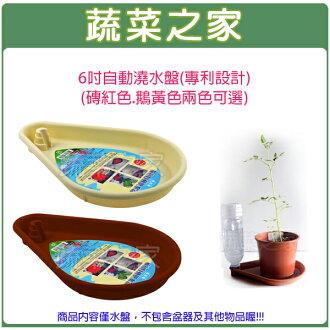 【蔬菜之家005-E01】6吋自動澆水盤(專利設計)(磚紅色.鵝黃色兩色可選)