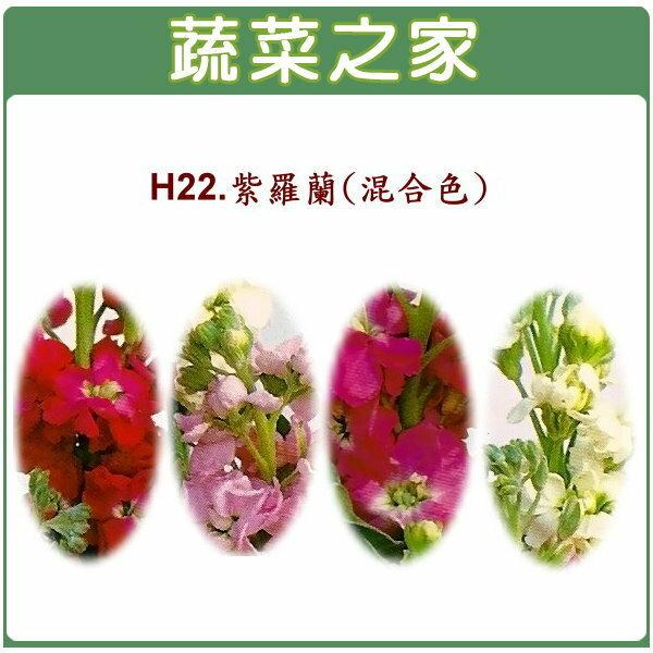 【蔬菜之家】H22.紫羅蘭(混合色,高40~60cm)種子(共有2種包裝可選)