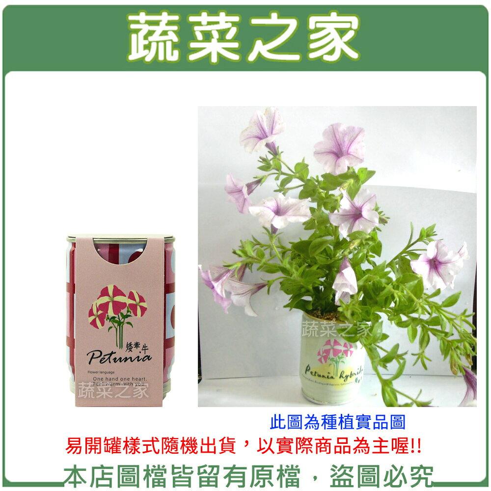 【蔬菜之家004-E20】iPlant易開罐花卉-矮牽牛