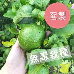 《售出》【茶活】有籽檸檬 ❤客製400斤(2斤一袋裝)❤台中興大檢驗無毒❤零檢出