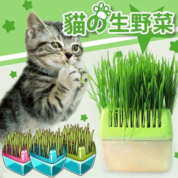 【附發票】Petstyle小麥草+貓草種植盒組合貓飼料貓咪貓吊床貓咪床貓砂貓跳台貓抓板貓砂盆