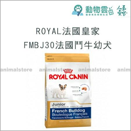 ROYAL法國皇家~FMBJ30法國鬥牛幼犬3kg