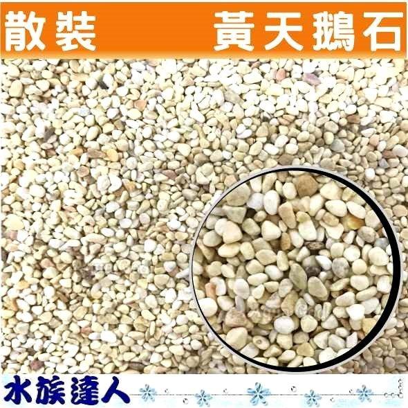 <br/><br/>  推薦【水族達人】【底砂】《散裝 黃天鵝石 1kg 3~ 5mm 》嚴選 砂石 天鵝石 造景 裝飾  美觀又大方<br/><br/>