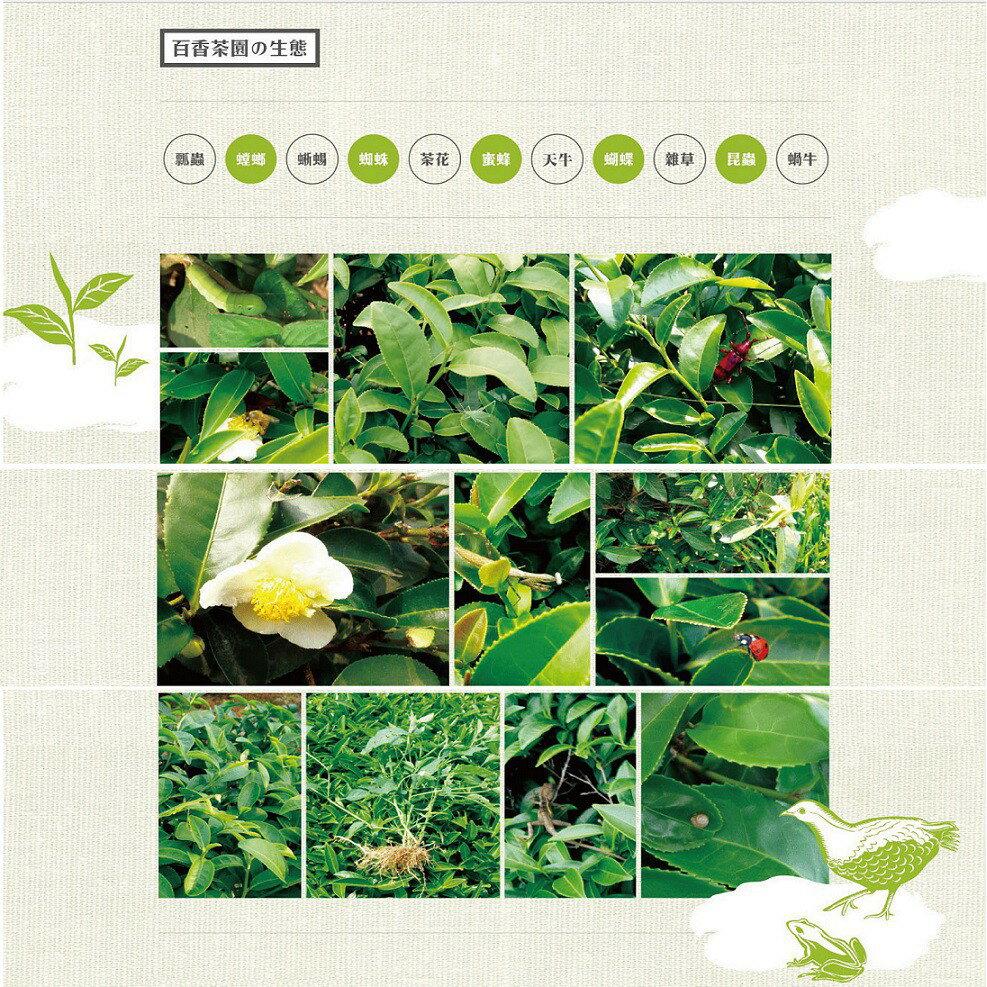 【百香】精選立體茶包-熟香烏龍茶茶葉  3g x 16包/罐 百香茶葉 立體茶包