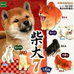 全套6款【日本正版】可愛柴犬 造型公仔 P7 扭蛋 轉蛋 第7彈 柴犬 EPOCH - 616623