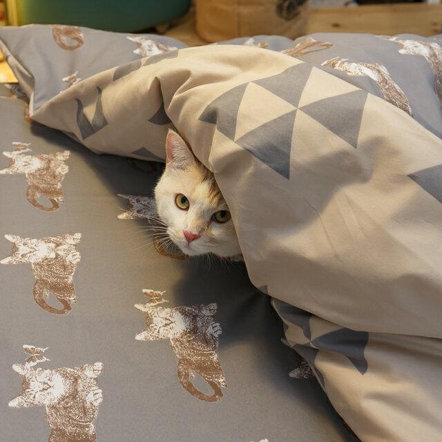 Iron cat 鐵灰小貓【床包鐵灰小貓】單人/雙人熱賣組  舒適磨毛布 台灣製造 5