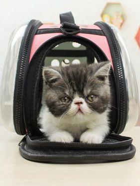 貓咪外出包寵物包便捷貓包旅行出行裝貓籠子貓袋  萬事屋  聖誕節禮物