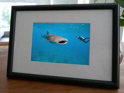 聚鯨Cetacea﹡Art【KLFZ-1135】diving潛水/color色彩 畫框相框