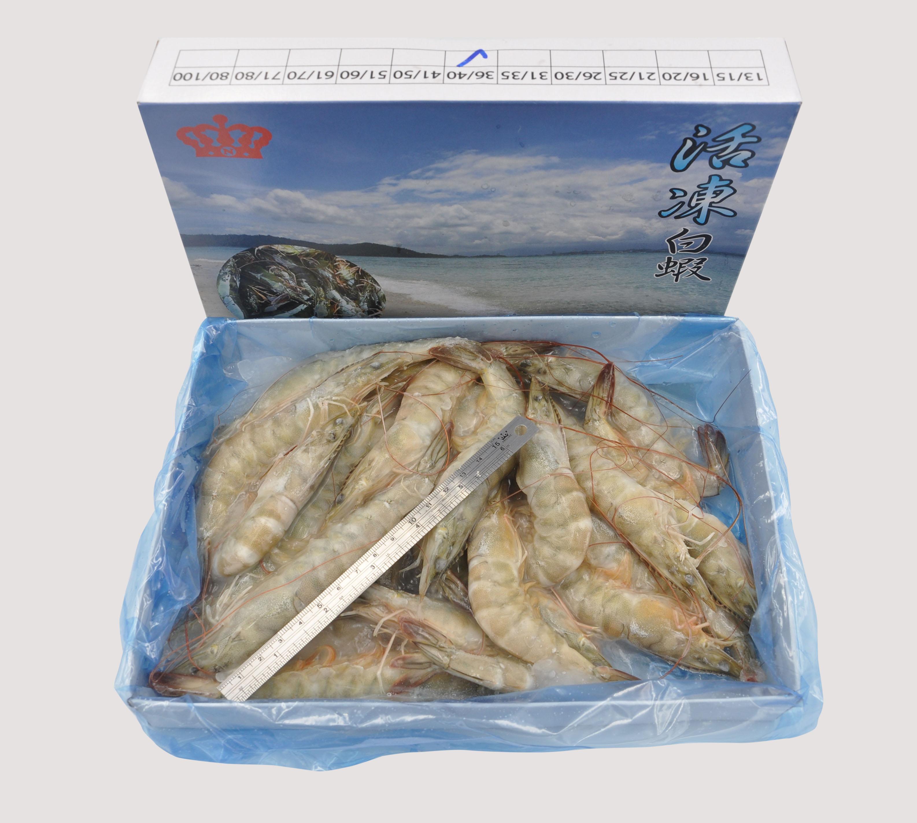 馬來西亞天然活凍白蝦  (36/40)  紅毛港海鮮市集