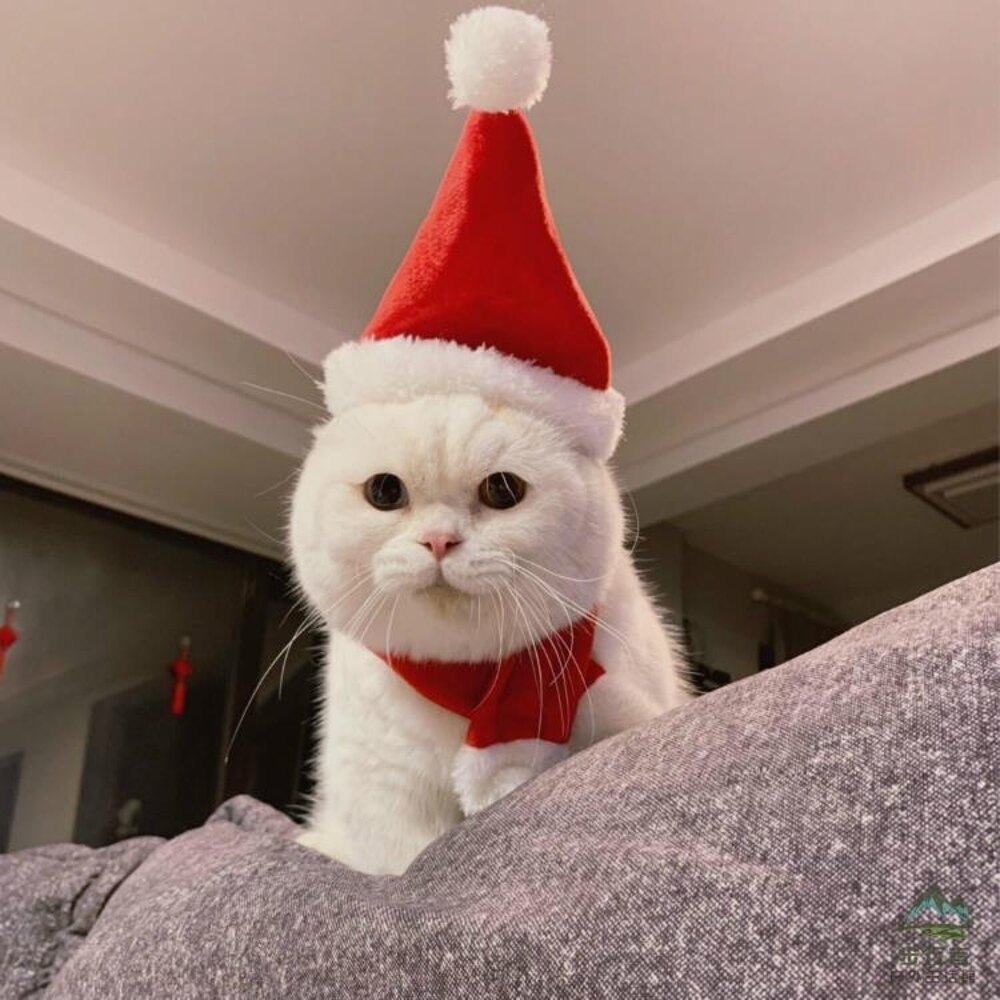 寵物頭套圣誕帽貓貓頭套貓咪頭飾裝扮圍巾帽套裝