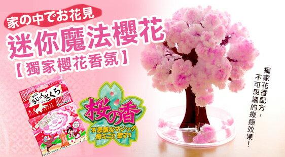 《賽先生科學工廠》紙樹開花-魔法櫻花(10cm) 獨家櫻花香